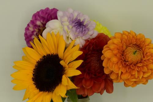 Variety Flowers