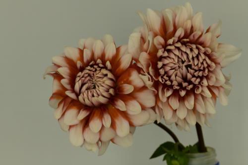 Bright beautiful flowers