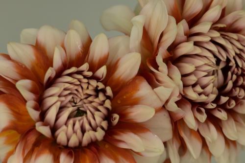 Amazing pretty creamy orange flowers