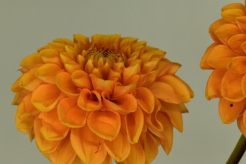 Creamy pretty flowers