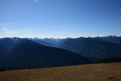 Hurricane RIdge Landscape