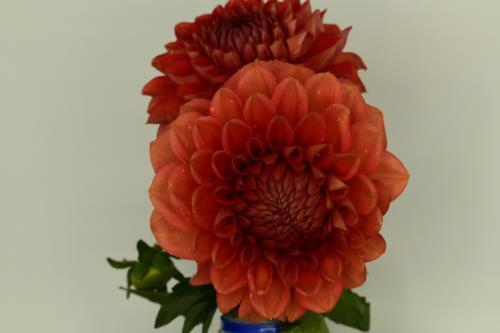 Pretty reddish orangeflowers
