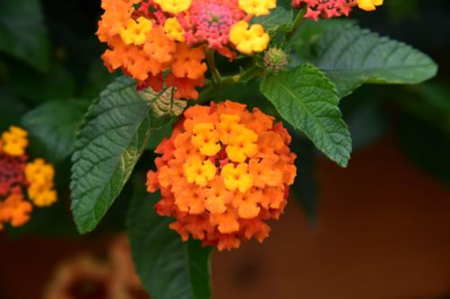 Orange flare of flowers