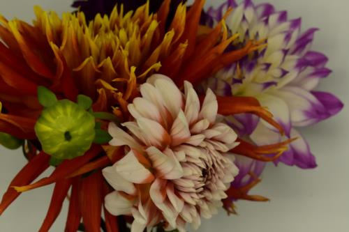 Bunch of colorful Flowers