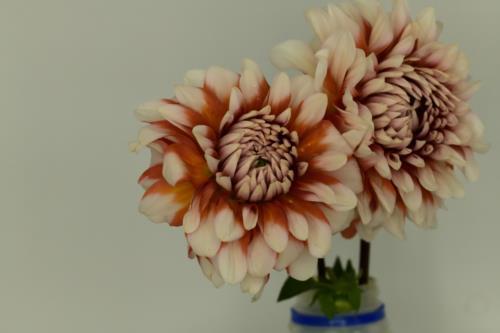 Creamy orange red flower