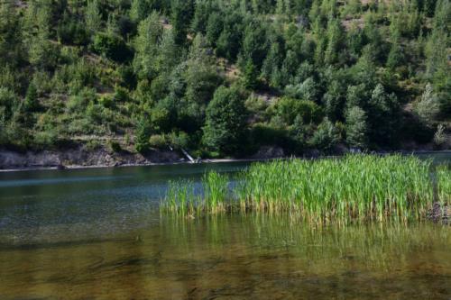 Beautiful greenery on the lake