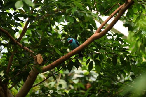 Blue Colorful Birds