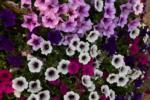 Dazzling summer flowers