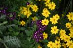 Bidens and Butterfly