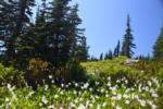 Flowers on the Paradise Slope during Summer